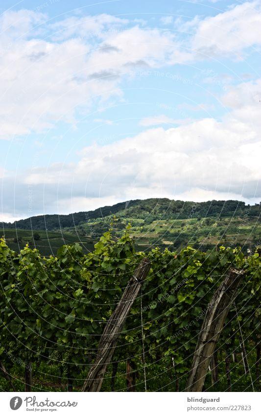 Black Forest Natur Himmel grün blau Pflanze Sommer Blatt Wolken Berge u. Gebirge Landschaft Feld Wachstum Hügel Schönes Wetter Weintrauben Weinberg