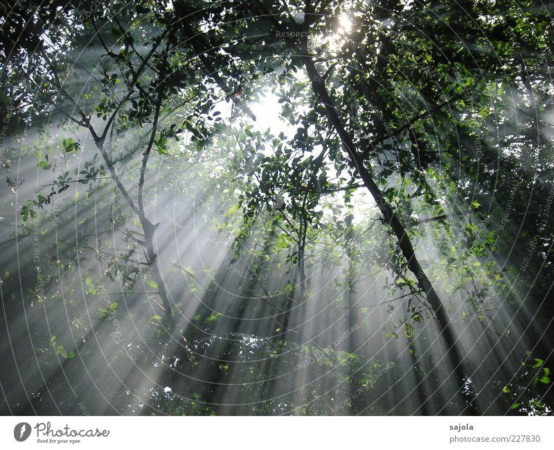 sonnenstrahlen Natur Baum Pflanze Sonne Blatt Wald Umwelt Stimmung ästhetisch Hoffnung leuchten Ast Frieden Schönes Wetter Strahlung parallel