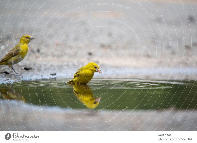Guck mal, da ist noch einer Natur Sommer Wasser Tier Ferne Umwelt natürlich Freiheit Vogel Wildtier nass Tiergesicht Pfütze Ornithologie