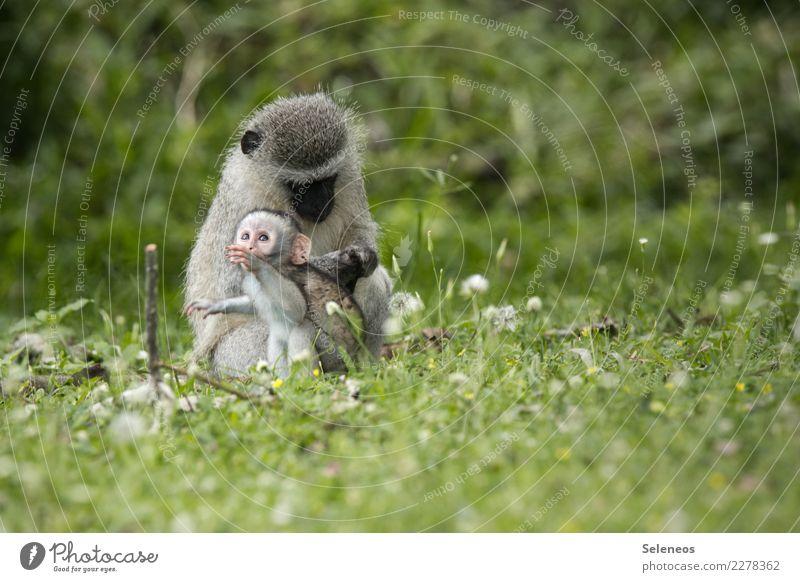 schau mal Natur Ferien & Urlaub & Reisen Sommer Tier Ferne Tierjunges Umwelt Wiese Tourismus Ausflug Wildtier Abenteuer niedlich Neugier Sommerurlaub Afrika