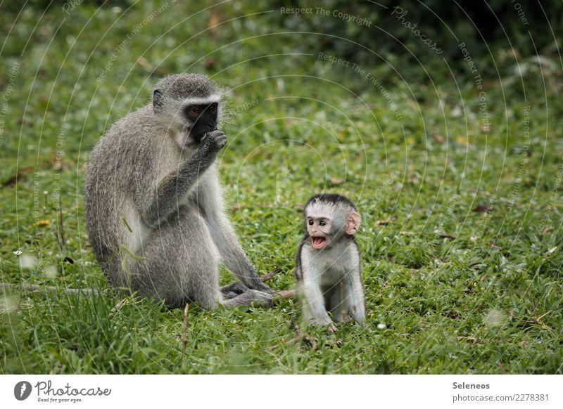 große Klappe Natur Ferien & Urlaub & Reisen Tier Ferne Tierjunges Umwelt natürlich Tourismus Garten Freiheit Ausflug wild Park Wildtier Abenteuer Wut