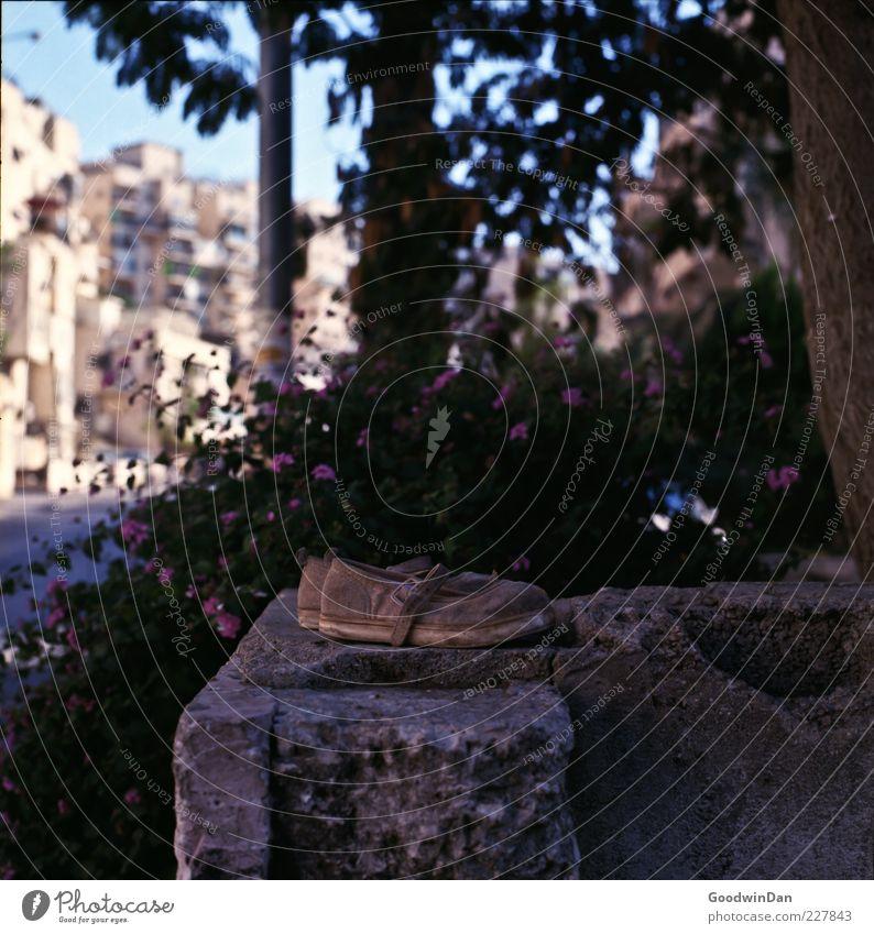 vergessen. alt Baum Blume ruhig Einsamkeit Mauer Stein Schuhe dreckig liegen vergessen Stadtrand Schuhpaar
