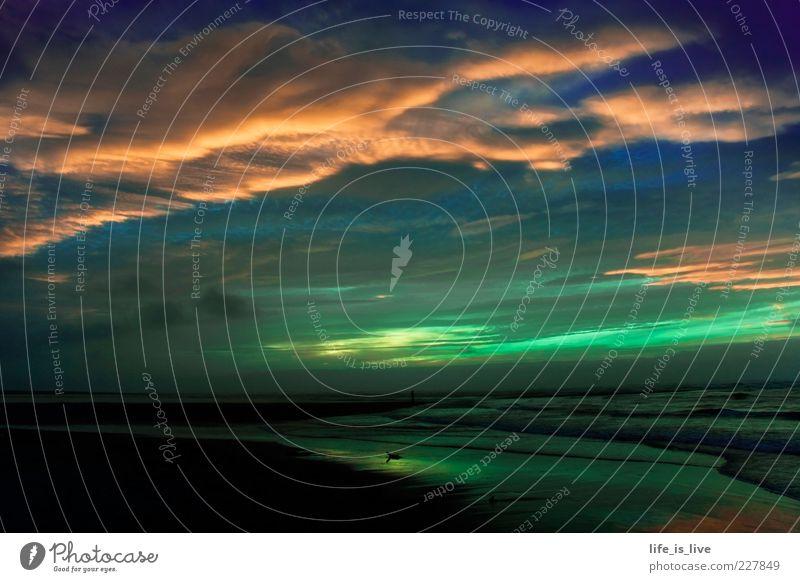 Freiheit Strand Meer Natur Landschaft Himmel Horizont Sonnenaufgang Sonnenuntergang Pazifikstrand Romantik Wolkenhimmel Neuseeland Menschenleer Abend