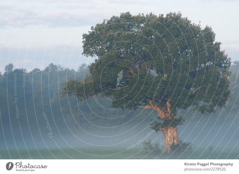 Baum auf dem Feld Natur Sommer Landschaft Wald Umwelt Nebel Frieden