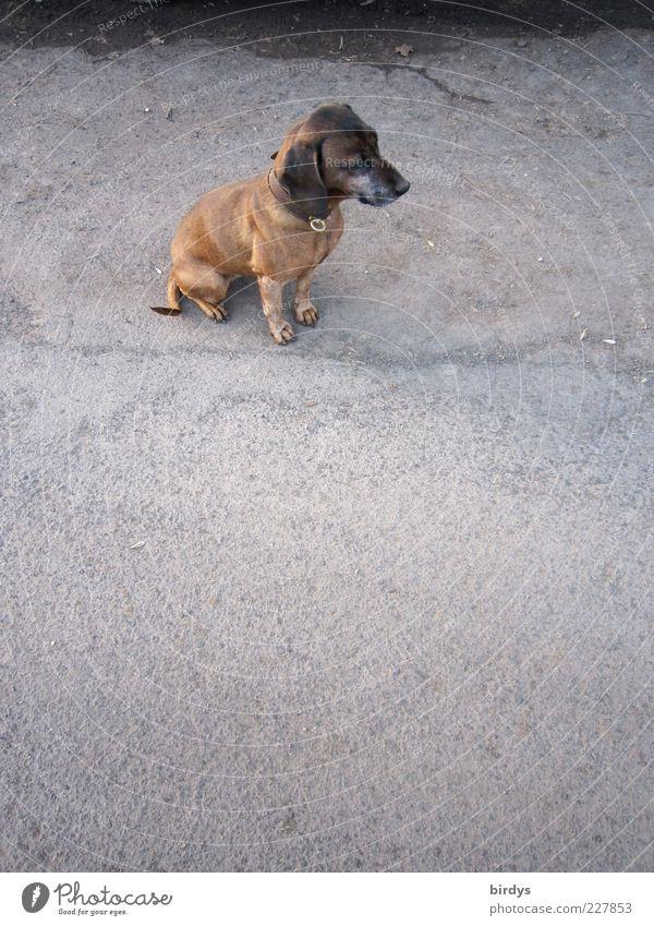 Warum Ich ???, - kleiner - alter - hässlicher - Hund ? schön ruhig Einsamkeit Tier Straße Traurigkeit Hund klein sitzen warten Platz Hoffnung niedlich Asphalt Sehnsucht Freundlichkeit