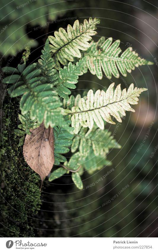 herbstfarben Natur grün Pflanze Herbst Wand Mauer Stimmung braun hell Umwelt trist natürlich trocken vertrocknet eckig Farn