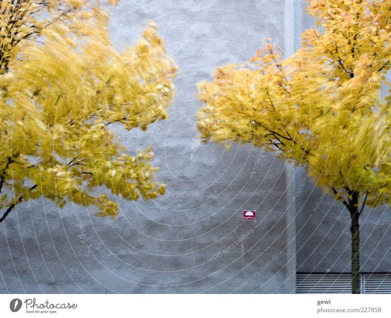 blowing in the wind Baum Haus Fassade kalt wild gelb silber weiß Leben Surrealismus Umwelt Herbst grau Farbfoto Außenaufnahme Experiment Textfreiraum unten