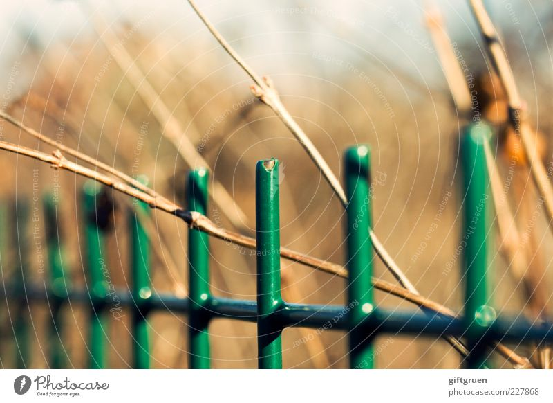 der lack ist ab Garten hell Zaun Gartenzaun Metallzaun lackiert Lack grün Pflanze Winter Frühling einfach geschlossen gefangen eingezäunt Freiheit Sehnsucht
