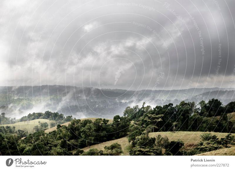 rain forest Umwelt Natur Landschaft Pflanze Urelemente Luft Himmel Wolken Gewitterwolken Sommer Klima Klimawandel Wetter schlechtes Wetter Nebel Regen Urwald