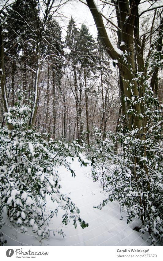Snowgate. Natur Landschaft Pflanze Winter Klima Wetter Eis Frost Schnee Baum Sträucher Blatt Wald Hügel ästhetisch außergewöhnlich kalt braun grün weiß
