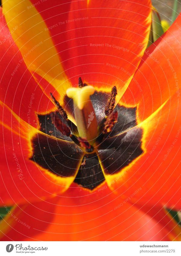 Macro Blume Makroaufnahme Blüte rot Stempel Farbe