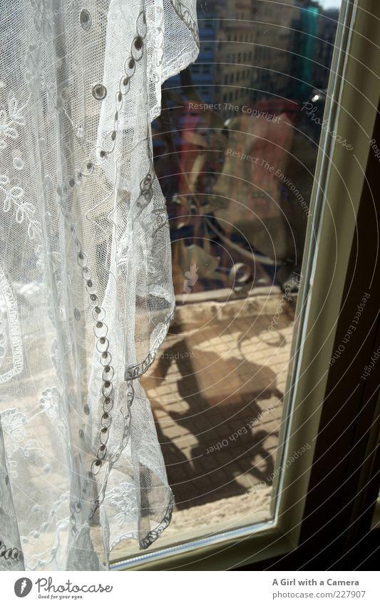 beyond Altstadt Haus Fenster hängen authentisch außergewöhnlich einfach schön Kitsch weiß Vorhang Netz abwärts Fensterscheibe Fensterrahmen Schönes Wetter