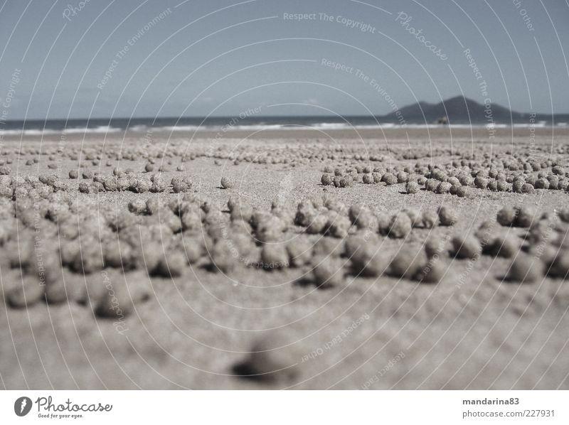 Krabbensandkugeln Himmel Natur Ferien & Urlaub & Reisen Sommer Strand Ferne Landschaft Sand Horizont rund außergewöhnlich Unendlichkeit trocken Kugel
