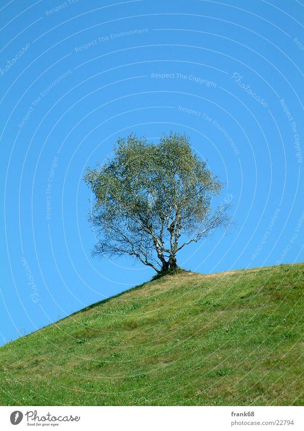 Einsamer Baum Baum Einsamkeit Wiese Berge u. Gebirge Frühling