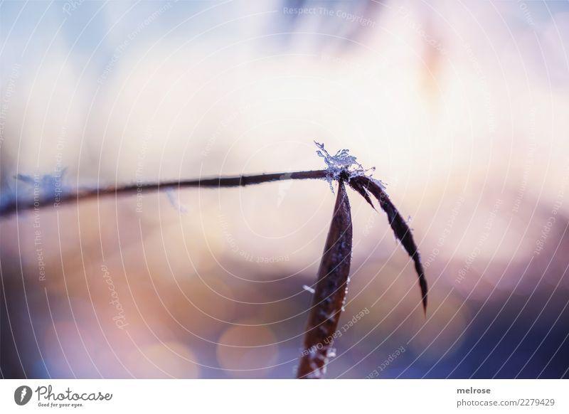 Kristall-Zucker Natur Sonnenlicht Winter Schönes Wetter Eis Frost Schnee Pflanze Gras Sträucher Blatt Grünpflanze Feld Unschärfe Lichtpunkt Lichtspiel