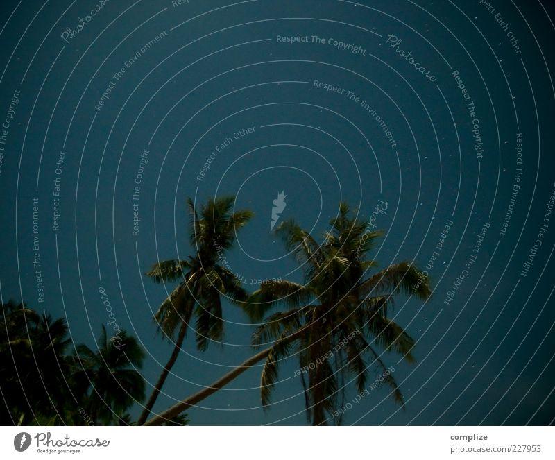 Fullmoon blau Baum Pflanze Stern Schönes Wetter Palme Sternenhimmel tropisch Palmenwedel