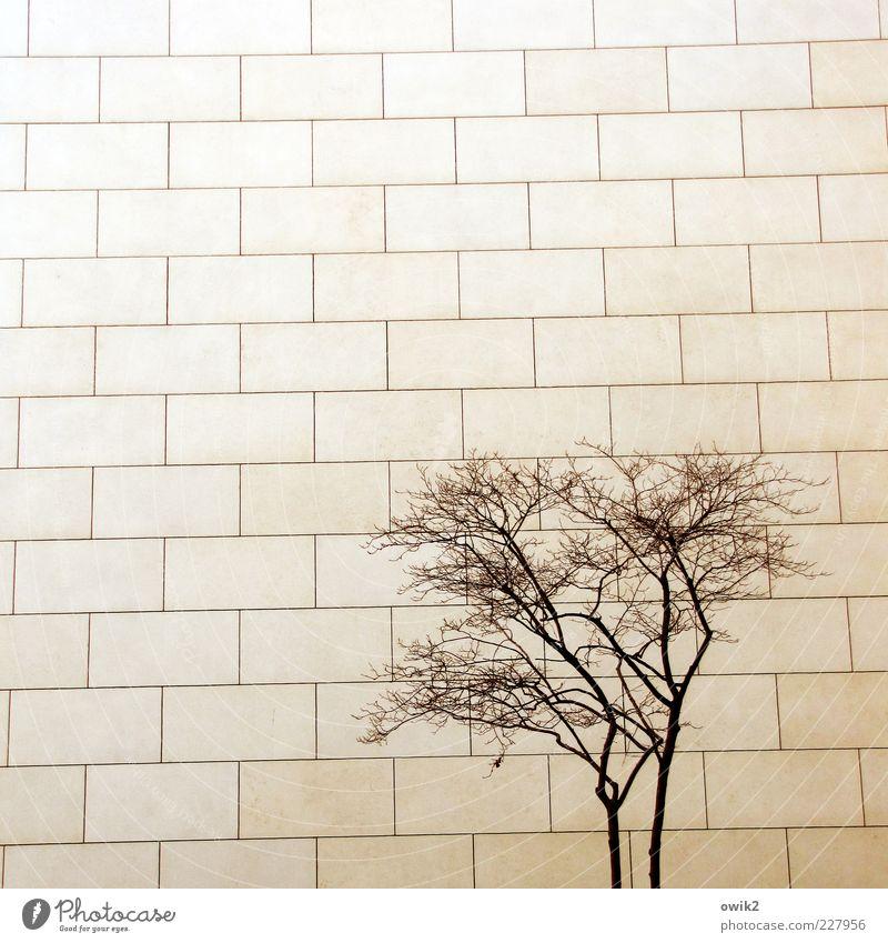 Konkurrenz Baum Pflanze kalt Wand Architektur Holz Mauer Gebäude Stein Linie Fassade trist einfach Bauwerk fest eckig