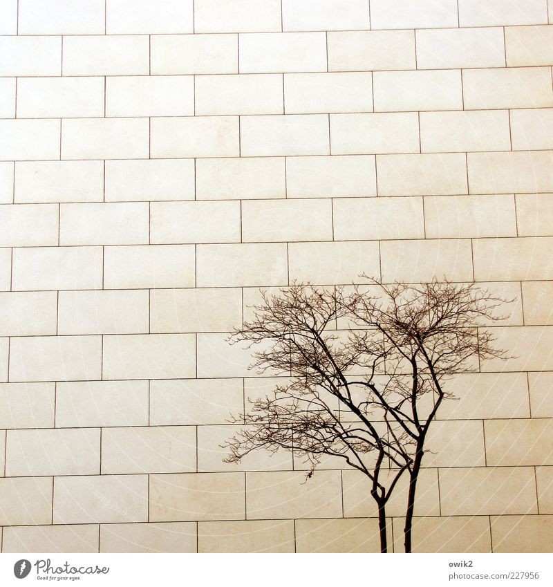 Konkurrenz Pflanze Baum Zweige u. Äste Holz Bauwerk Gebäude Architektur Mauer Wand Fassade Steinplatten Steinmauer Oberflächenstruktur eckig einfach fest kalt