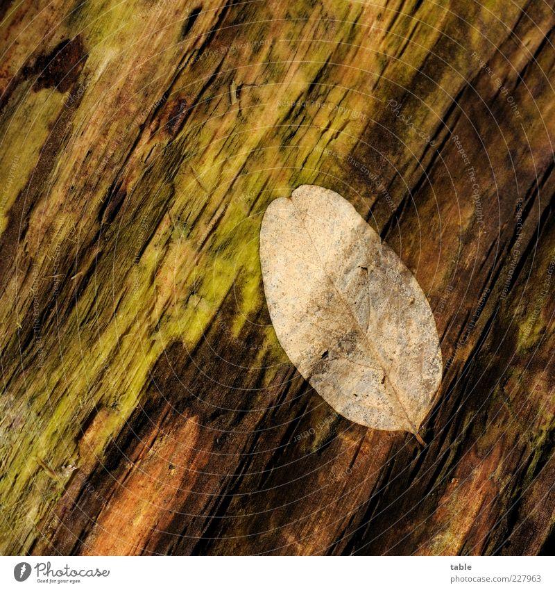 Rest Natur alt grün Baum Pflanze Blatt schwarz Herbst Umwelt Holz braun liegen Wandel & Veränderung Vergänglichkeit Ende trocken