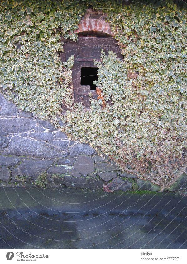 Märchenhaftes Fenster mit... alt Stil Fassade Romantik außergewöhnlich Idylle fantastisch historisch Loch positiv Nostalgie harmonisch Efeu früher Ranke