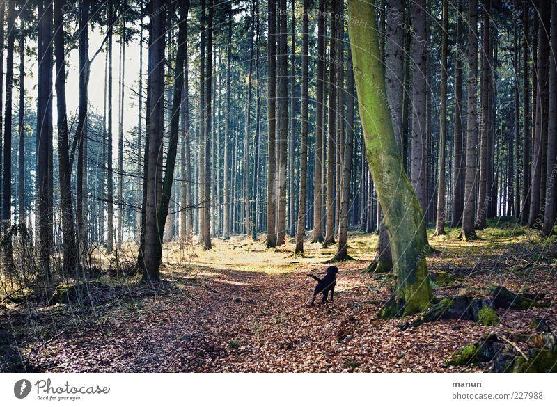 woodsdog Natur schön Baum Einsamkeit schwarz Wald dunkel Landschaft Wege & Pfade Hund Ausflug natürlich authentisch einzeln Schönes Wetter Haustier