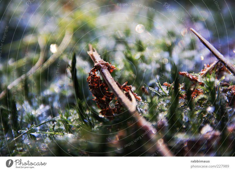 glitzern Natur blau grün schön Pflanze Ferne gelb Gefühle Glück Stimmung außergewöhnlich elegant frei Fröhlichkeit Boden neu