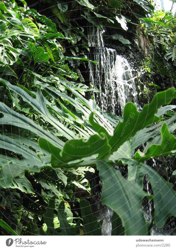 Wasserfall Urwald Wald grün Blatt