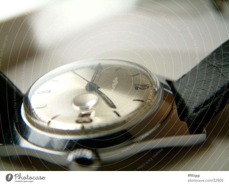 uhr Uhr Zifferblatt Armband Leder Zeit Dinge Makroaufnahme Uhrenzeiger Baumkrone