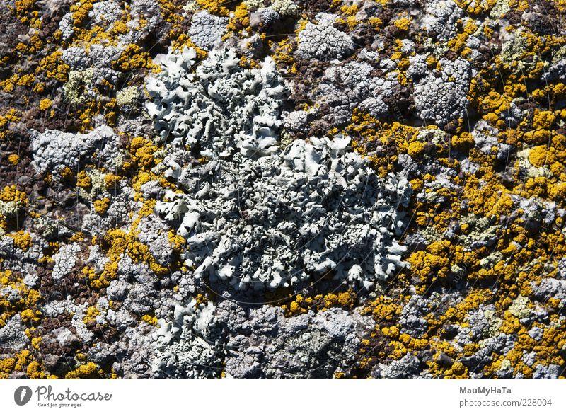 Flechte Natur Pflanze Urelemente Sonnenlicht Klima exotisch Garten Park Urwald Felsen Alpen Berge u. Gebirge chaotisch Farbe Sinnesorgane Farbfoto Außenaufnahme