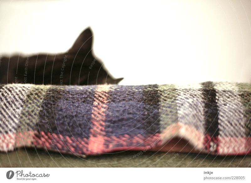 Eine Katze im Haus legalisiert das reine Nichtstun! :-D Katze Tier schwarz ruhig Erholung Kopf Zufriedenheit liegen schlafen Pause Frieden Gelassenheit Müdigkeit genießen Decke harmonisch