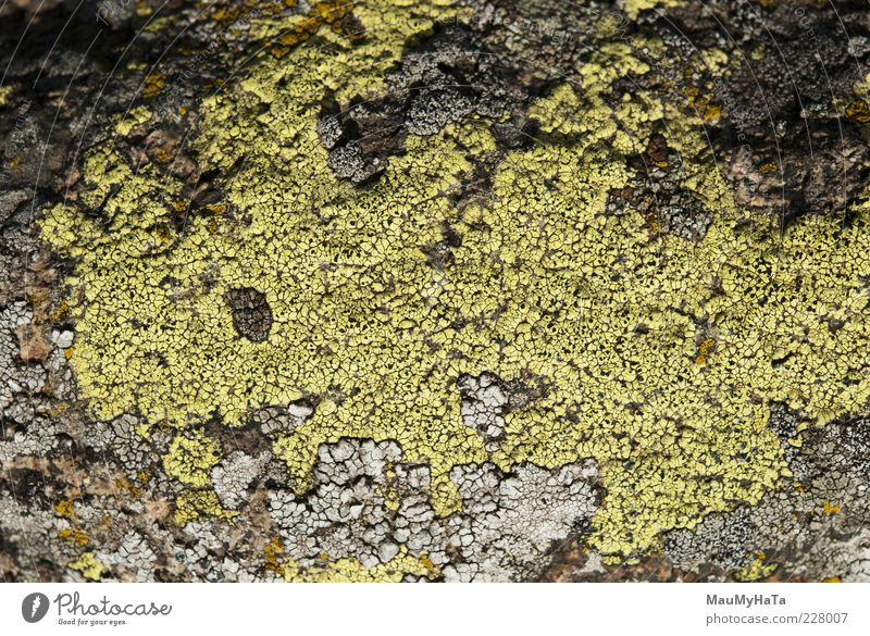 Flechte Natur Pflanze Klima Wildpflanze exotisch Garten Park Urwald Felsen Alpen Berge u. Gebirge chaotisch Kunst Leben Macht Rätsel Stil Farbfoto Außenaufnahme