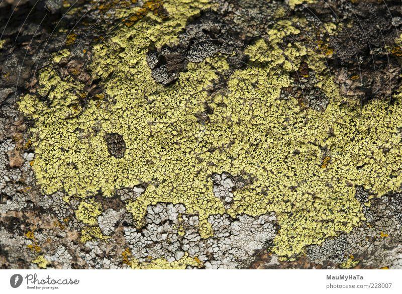 Natur Pflanze Berge u. Gebirge Leben Garten Stil Kunst Park Felsen Klima Macht Alpen Urwald chaotisch exotisch Rätsel