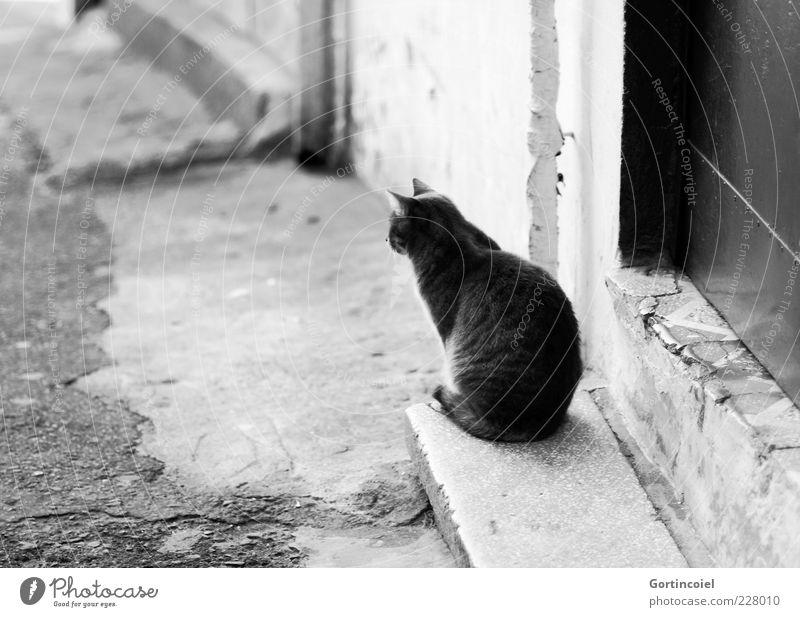 Was bringt der Tag? ruhig Tier Katze Tür sitzen warten Treppe Fell Gelassenheit geduldig Schwarzweißfoto freilebend Herumtreiben Straßenkatze