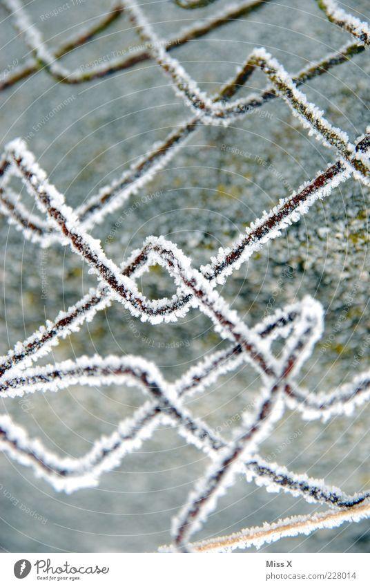 Maschenfrostzaun in the morning Winter kalt Schnee Metall Eis Frost Zaun gefroren Rost Draht Raureif gekrümmt Barriere Schwarzweißfoto Gartenzaun