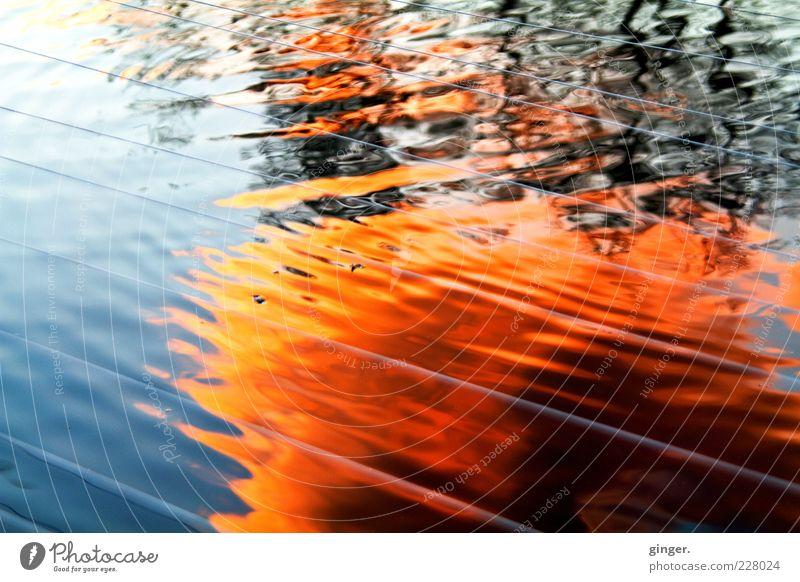 Feuerwasser Umwelt Wasser Himmel Sonnenaufgang Sonnenuntergang Wetter Schönes Wetter Teich Bewegung glänzend Wellen Reflexion & Spiegelung Schnur Kräusel Kraft