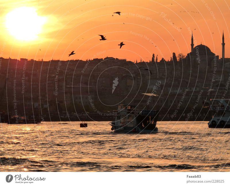 Feierabendverkehr Wasser Stadt Sonne Ferien & Urlaub & Reisen Meer Leben Religion & Glaube Vogel fliegen Tourismus Verkehr Fluss Hafen Skyline Reichtum
