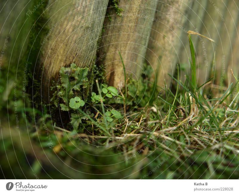 Pflanzentreffpunkt Holz-Palisade alt grün Blatt Wiese Gras braun Erde frisch Wachstum Trauer weich Zaun feucht Duft