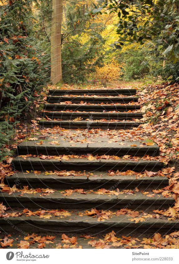 Herbstspaziergang ruhig Ausflug Umwelt Natur Landschaft Pflanze Baum Wildpflanze Wald Treppe Blatt Stein Farbfoto Außenaufnahme Menschenleer Tag Steintreppe