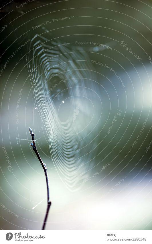 fein vernetzt Natur Einsamkeit ruhig dunkel kalt Traurigkeit natürlich Angst Erfolg authentisch Ast harmonisch dünn gruselig Falle Enttäuschung