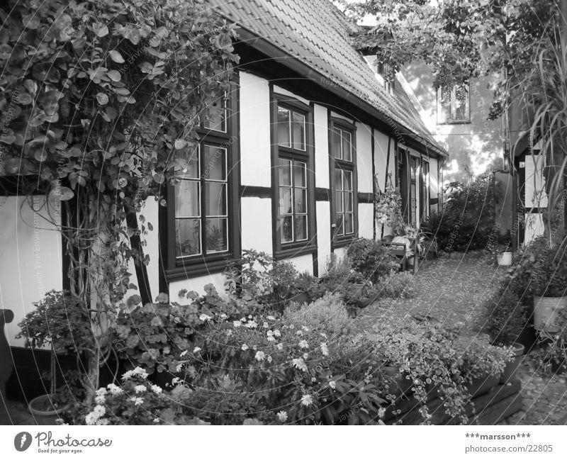 Fischerhaus in Warnemünde Haus Deutschland Hütte Ostsee Mecklenburg-Vorpommern Rostock Badeort Fachwerkfassade Warnemünde Vorgarten