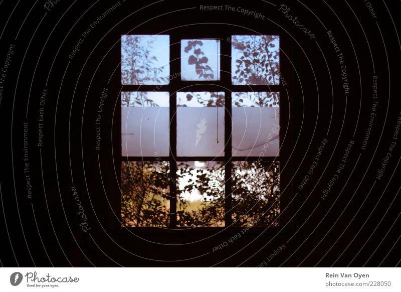 Natur blau schön Pflanze Sommer Winter Blatt schwarz Haus gelb Umwelt Fenster Herbst Wand Architektur Mauer