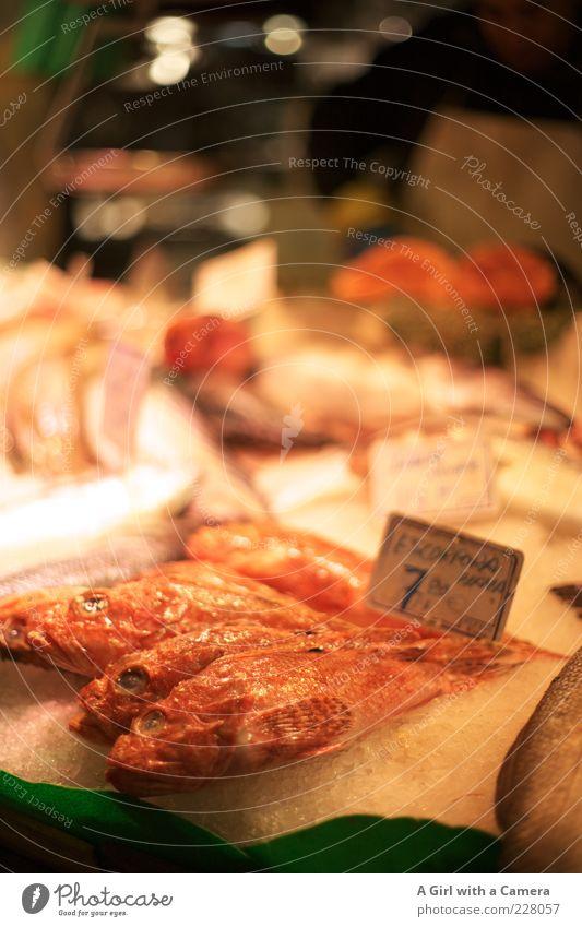 einmal Nase zuhalten .... Fisch Fischmarkt liegen kalt Marktstand verkaufen Präsentation Vitamin Farbfoto Innenaufnahme Kunstlicht Preisschild Angebot Unschärfe