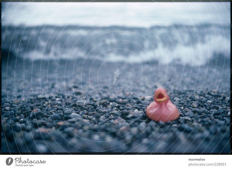 ganz alleine Natur Wasser Strand Meer Einsamkeit Wellen trashig Badeente Strandgut Steinstrand