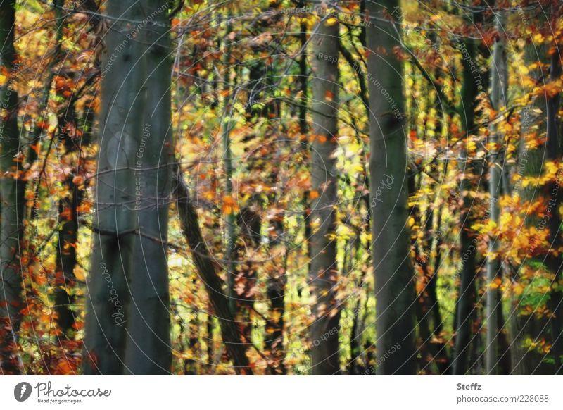 es war Herbst Natur Pflanze Baum Blatt Herbstlaub Baumstamm Laubbaum Wald Herbstwald Laubwald schön gelb grün orange Romantik Herbstgefühle Waldstimmung