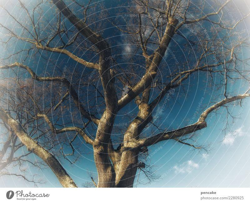jahreszeiten   winterschlaf Natur Urelemente Himmel Winter Baum kalt kahl Ast tief Blauer Himmel Vignettierung Religion & Glaube Farbfoto Außenaufnahme