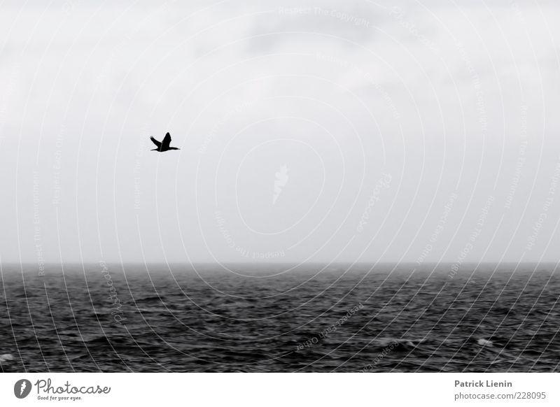 Surfin Bird Umwelt Natur Urelemente Wasser Herbst Wetter schlechtes Wetter Unwetter Wind Nebel Regen Wellen Ostsee Meer Tier Wildtier Vogel 1 fliegen bedrohlich
