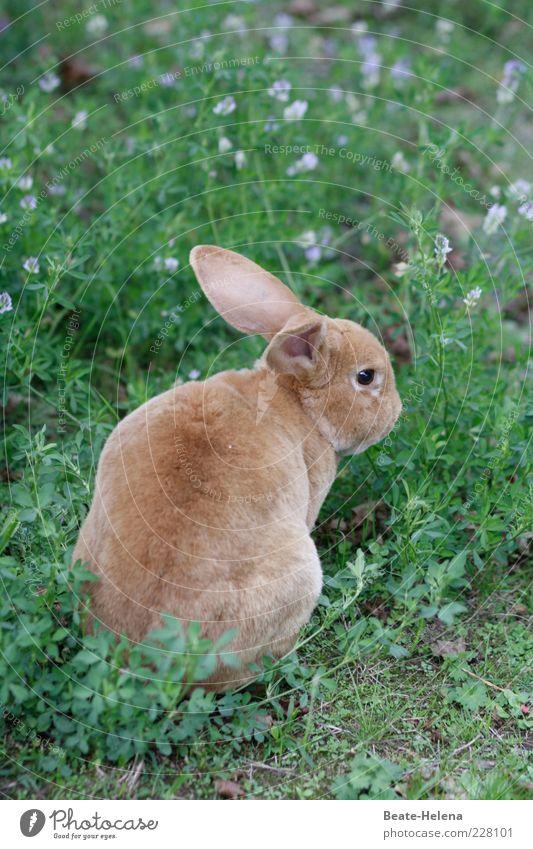 Die Zeit wird kommen! Natur schön Sommer Blume Tier Gras Frühling natürlich braun Wildtier sitzen ästhetisch beobachten niedlich Schönes Wetter Fell