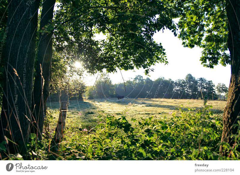 Guten Morgen! Umwelt Natur Landschaft Pflanze Wolkenloser Himmel Frühling Sommer Klima Schönes Wetter Nebel Baum Gras Sträucher Moos Blatt Grünpflanze