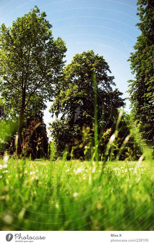 Sehnsucht Himmel grün Baum Blume Sommer Blatt ruhig Erholung Wiese Gras Garten Frühling Park frisch groß Wachstum