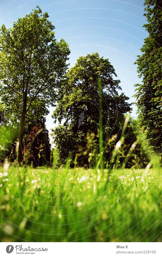 Sehnsucht ruhig Sommer Himmel Frühling Schönes Wetter Baum Blume Gras Blatt Garten Park Wiese Blühend Wachstum groß positiv grün Erholung Pause Sommertag